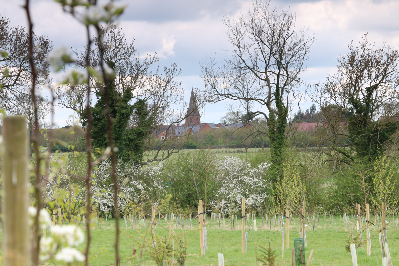 View south of St Margaret's of Crick church spire from Warm Brook, Spring 2015