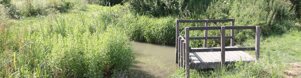 Pond dipping pool on Warm Brook